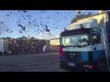 Décollage de 19000 pigeons